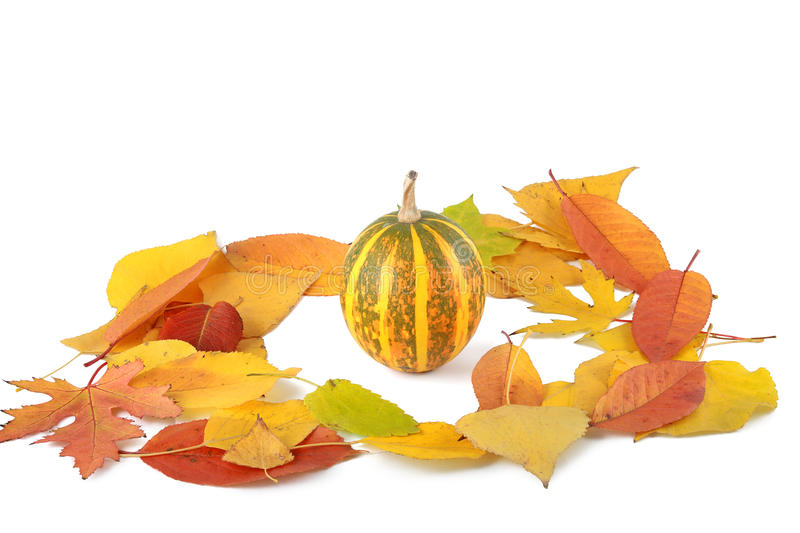 Pumpkin on pile of fall leaves stock photography