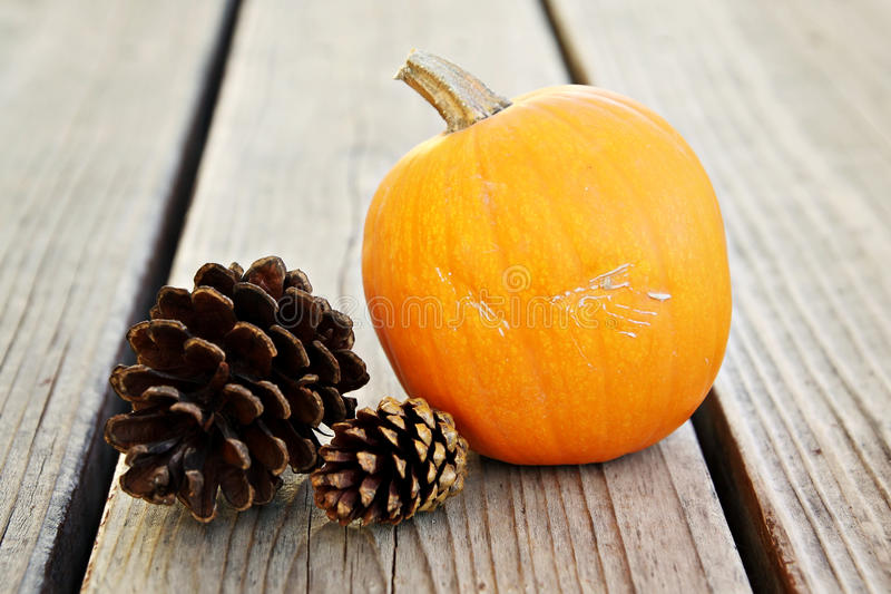 Download Pumpkin with Pinecones stock photo. Image of pinecone - 21774350
