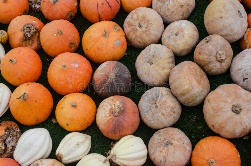 Pumpkin rot stock images