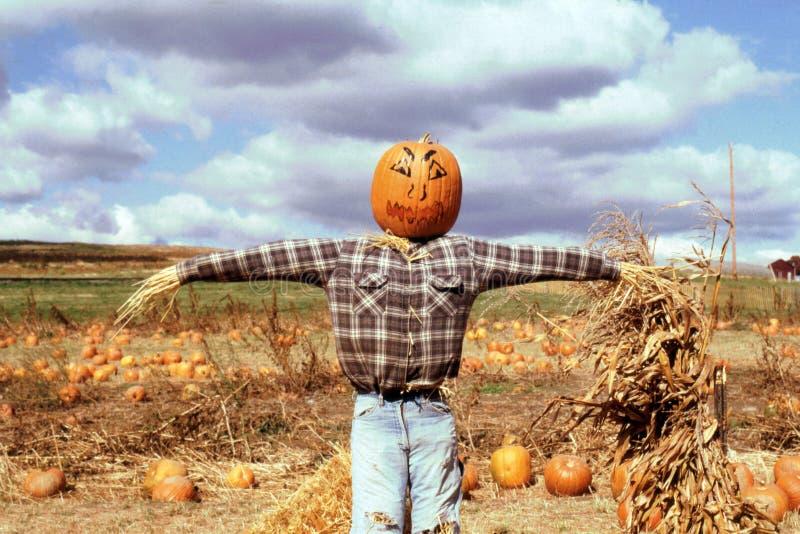 Pumpkin Scarecrow royalty free stock photography
