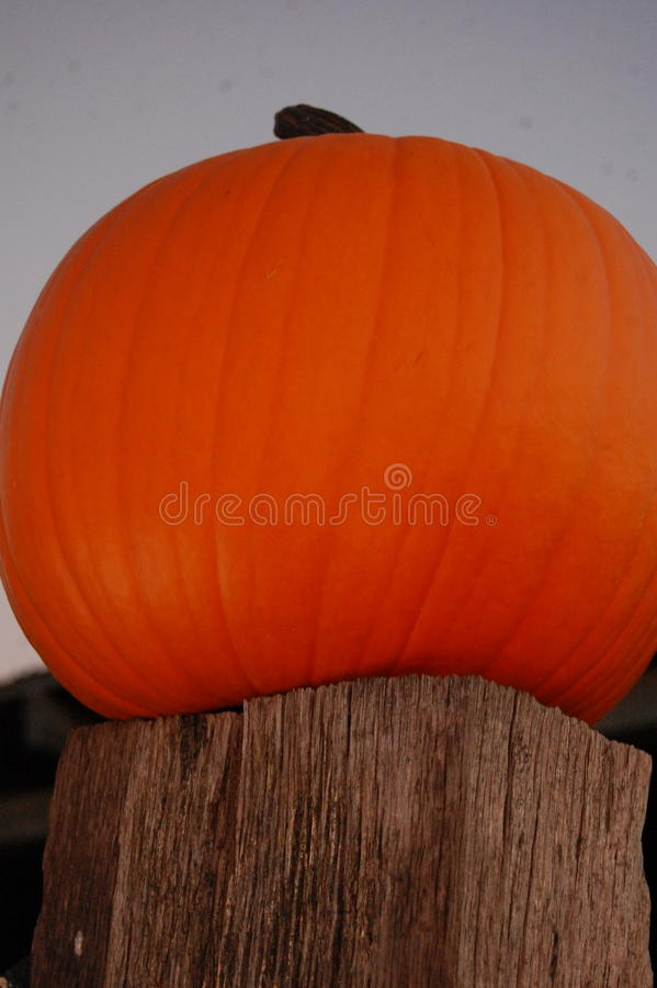 Pumpkin sitting on a post royalty free stock photo