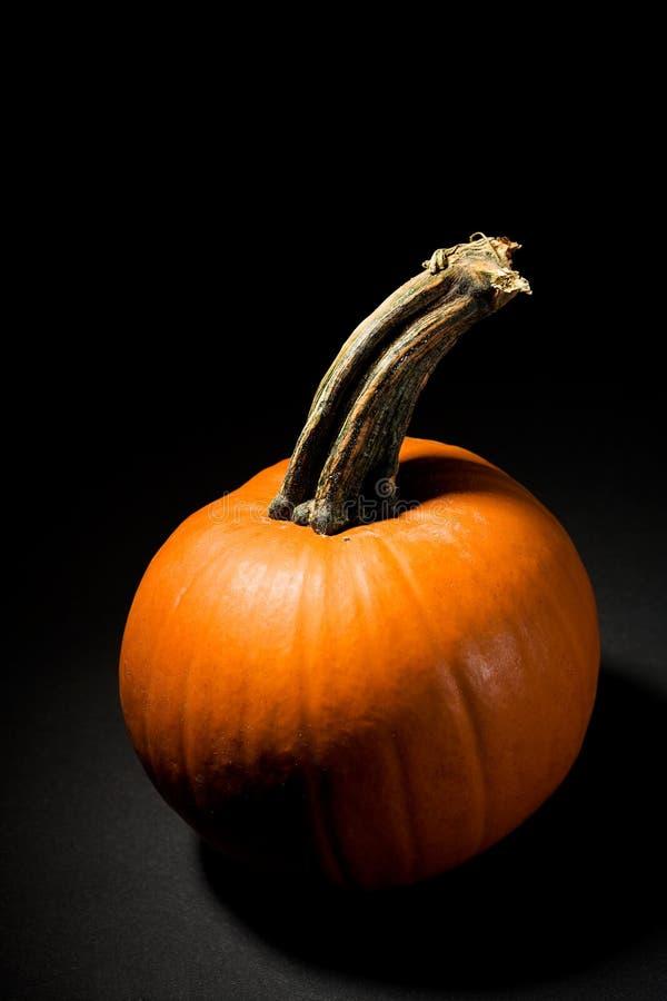 Pumpkin: Spooky Pumpkin On Black Background. Halloween pumpkin dramatically lit on black background royalty free stock image