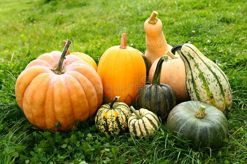 Pumpkin and squash harvest stock photography