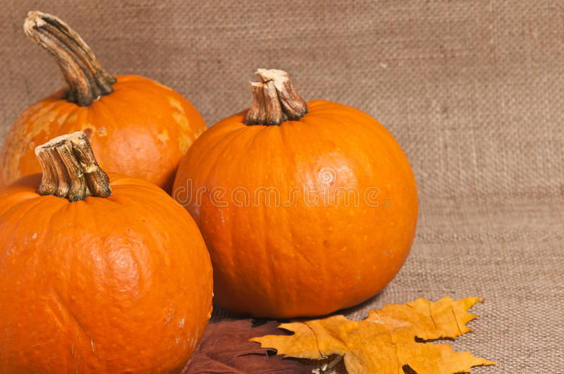 Pumpkin Table Top royalty free stock photography