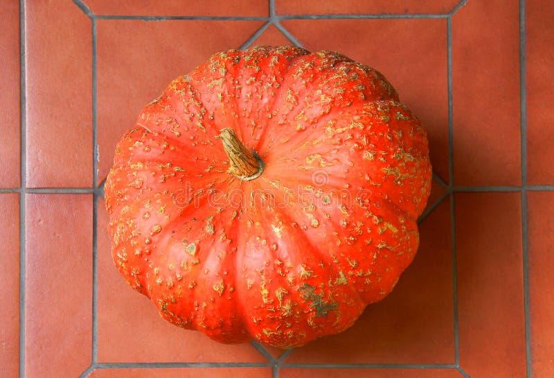 Pumpkin on the tile floor stock photography