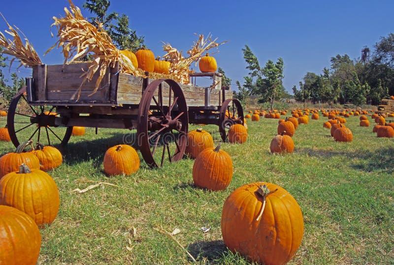 Pumpkin' Time stock photography