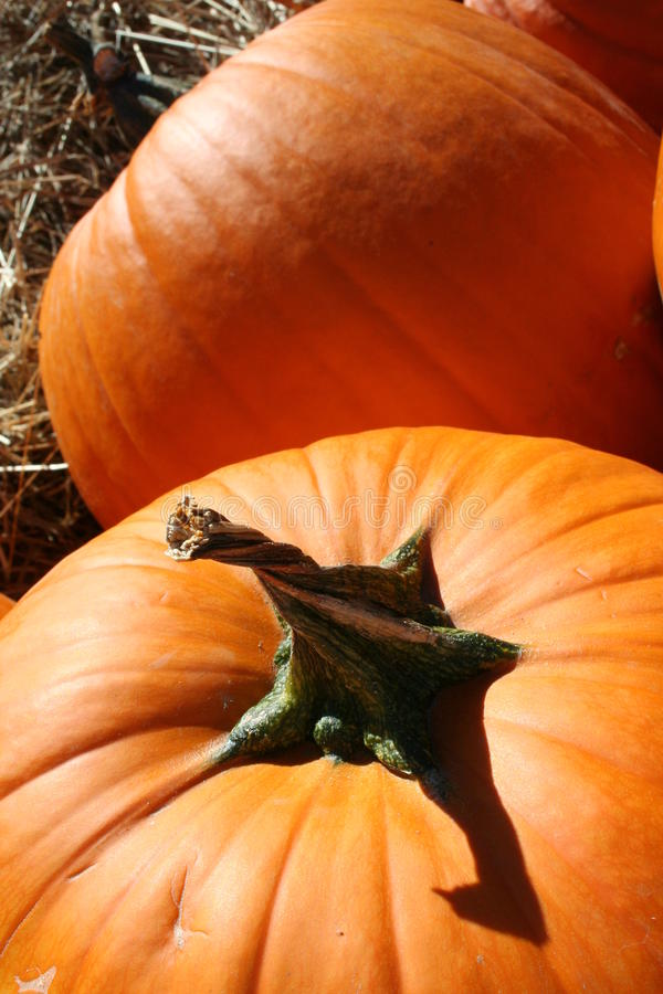 Pumpkin with twisted stem royalty free stock photography