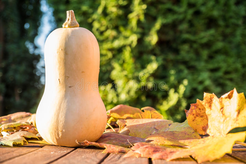 Download Pumpkin under the sun stock photo. Image of green, decoration - 83704242