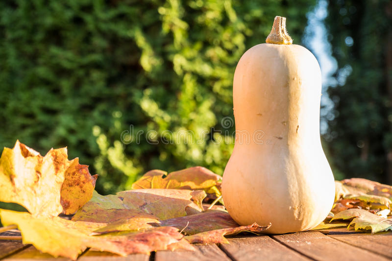 Download Pumpkin under the sun stock photo. Image of fall, fresh - 83704270
