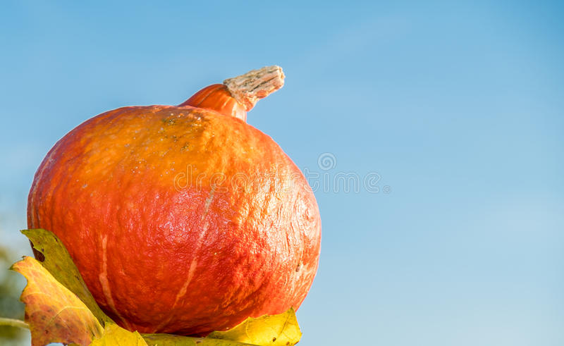 Download Pumpkin Under The Sun Stock Photo - Image: 83704394