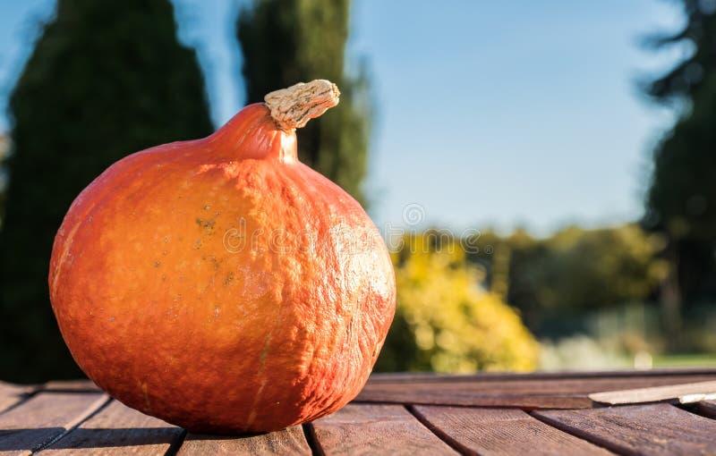 Download Pumpkin Under The Sun Stock Photo - Image: 83704459