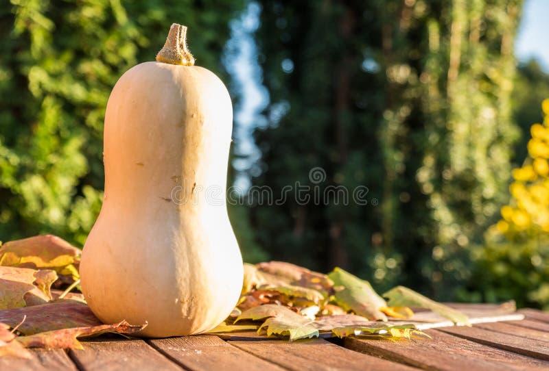 Download Pumpkin Under The Sun Stock Photo - Image: 83704530