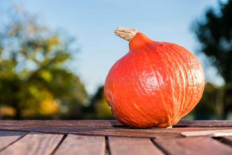 Download Pumpkin Under The Sun Stock Photo - Image: 83704613