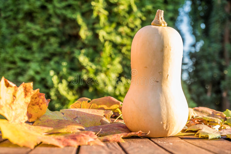 Download Pumpkin under the sun stock image. Image of background - 83705191