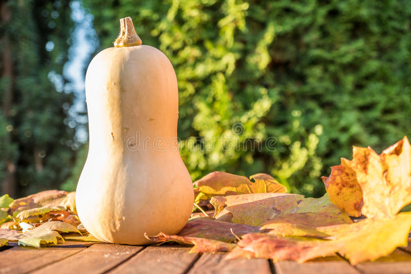 Download Pumpkin Under The Sun Stock Photo - Image: 83705441