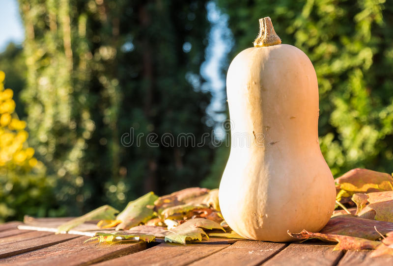 Download Pumpkin Under The Sun Stock Photo - Image: 83705483
