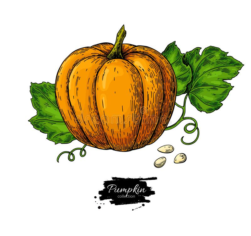 Pumpkin vector drawing set. Isolated hand drawn object with sliced piece and leaves. stock illustration