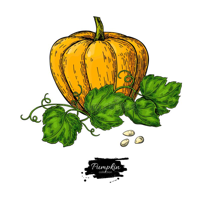 Pumpkin vector drawing set. Isolated hand drawn object with sliced piece and leaves. royalty free illustration