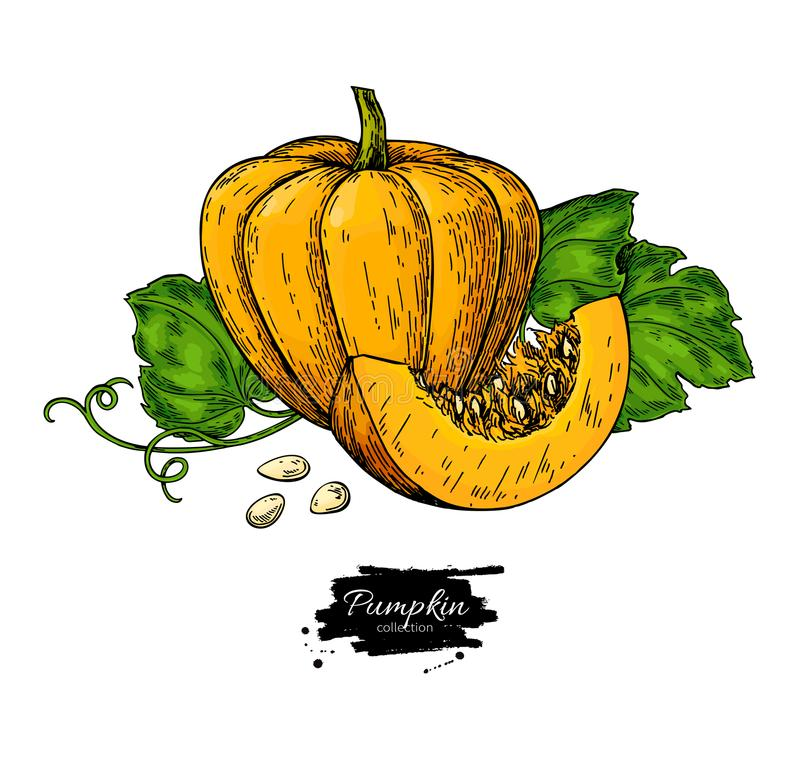 Pumpkin vector drawing set. Isolated hand drawn object with sliced piece and leaves. vector illustration