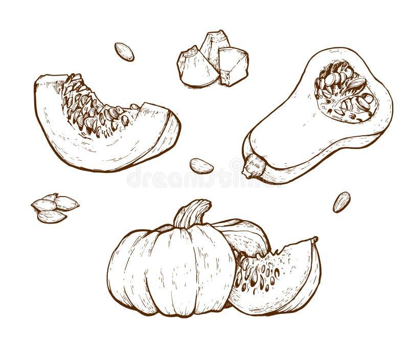 Pumpkin vector drawing set. stock illustration