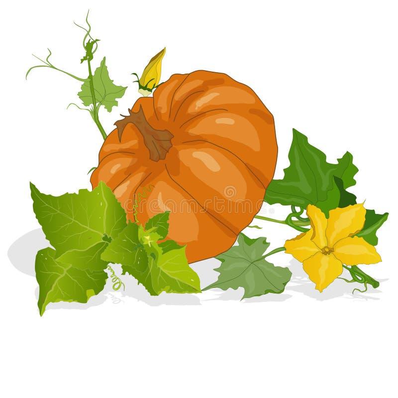 Download Pumpkin Vector Illustration Stock Vector - Image: 83714099