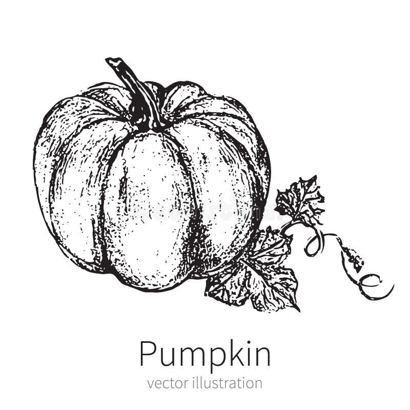Pumpkin vector illustration isolated on white background stock illustration