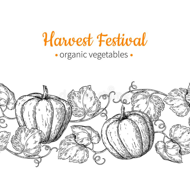 Pumpkin vector seamless pattern. Hand drawn vintage border. Harvest festival illustration. royalty free illustration
