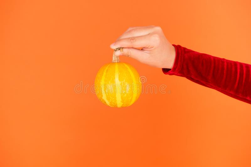 Pumpkin vegetable. Healthy food. Natural product. Homegrown vegetables. Cute pumpkin. Halloween attribute. Small. Decorative pumpkin in hand close up. Harvest stock photos
