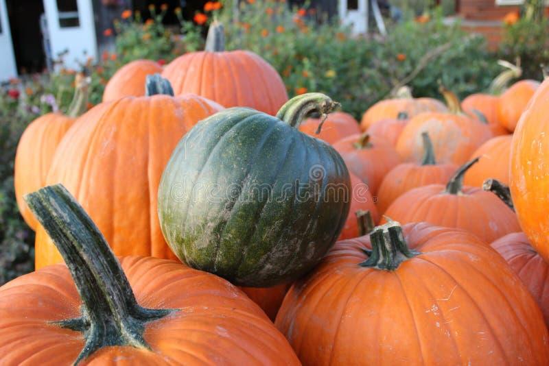 Pumpkin, Vegetable, Winter Squash, Calabaza royalty free stock photo