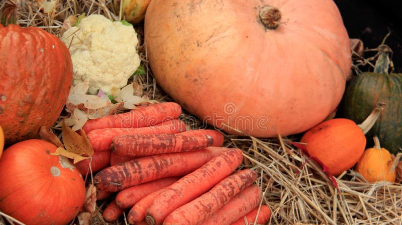 Pumpkin and vegetables.  Local Market royalty free stock photos
