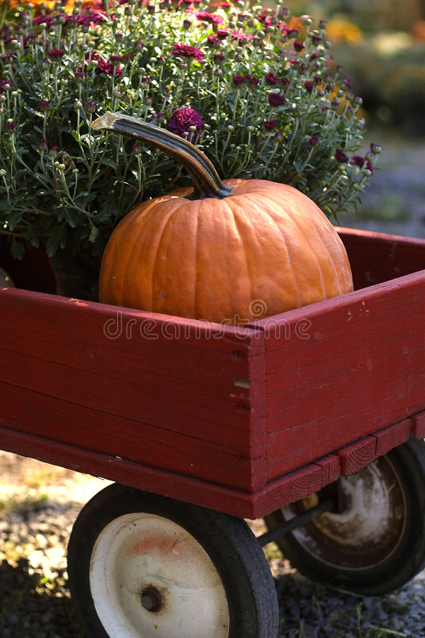 Download Pumpkin Wagon stock image. Image of mums, colorful, pumpkins - 2456385