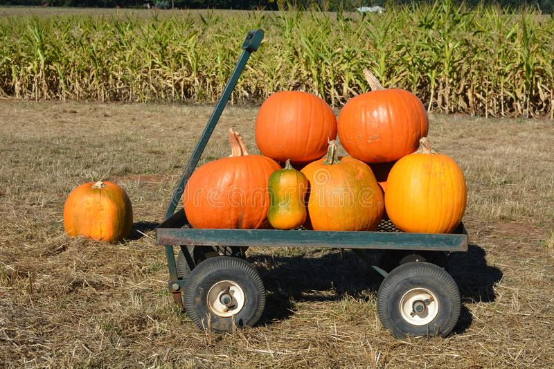 Pumpkin on a wagon in front of a cornfield. These are pumpkins on a small wagon in front of a cornfield east of Salem, Oregon stock photography