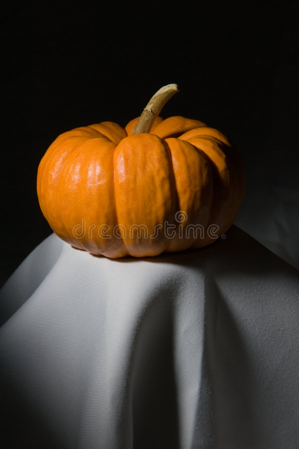 Download Pumpkin on white stock image. Image of orange, color, fall - 6671483