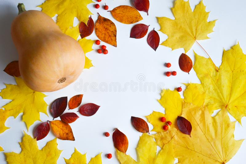 Pumpkin on white background.  the decor of the occasion. yellow maple leaves and red small leaves. autumn still life. the colors o royalty free stock image