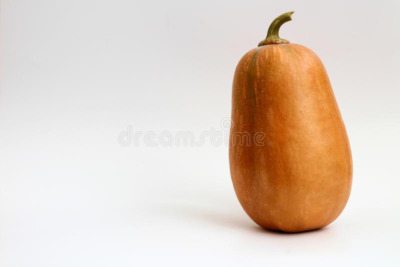 A pumpkin  on white background. Plant, miniature, closeup, october, thanksgiving, stem, festive, big, object, small, space, nobody, yellow, studio, trick stock image