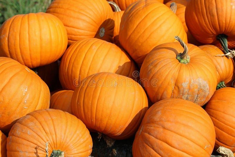 Pumpkin, Winter Squash, Calabaza, Cucurbita stock photography