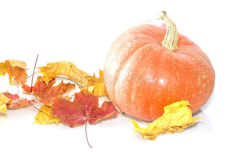 Pumpkin and yellow leaves . Autumn still life. Autumn calendar.  royalty free stock image