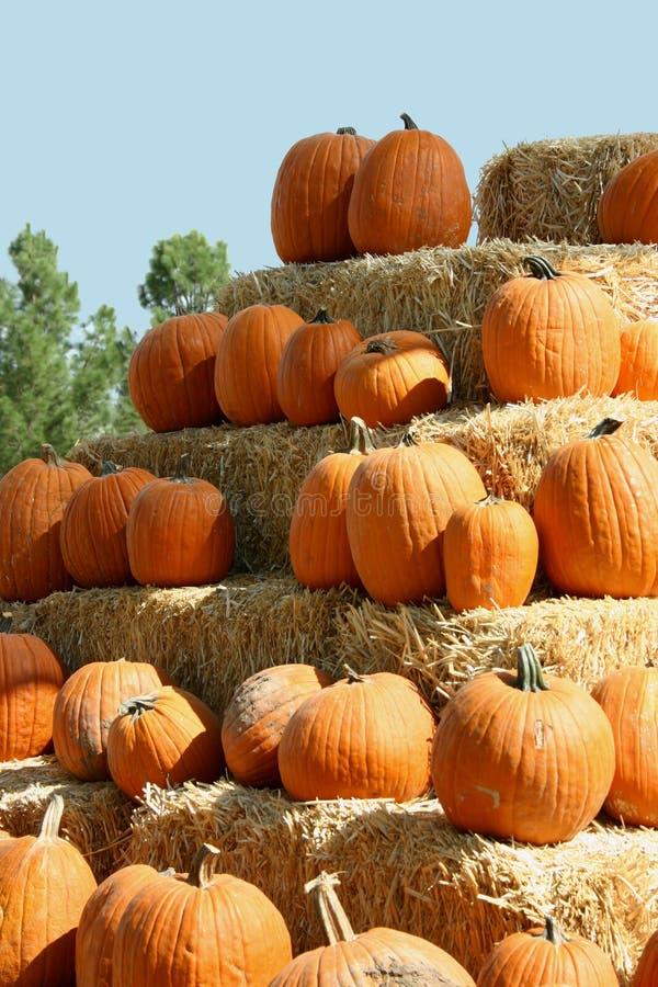 pumpkin004 стоковое изображение