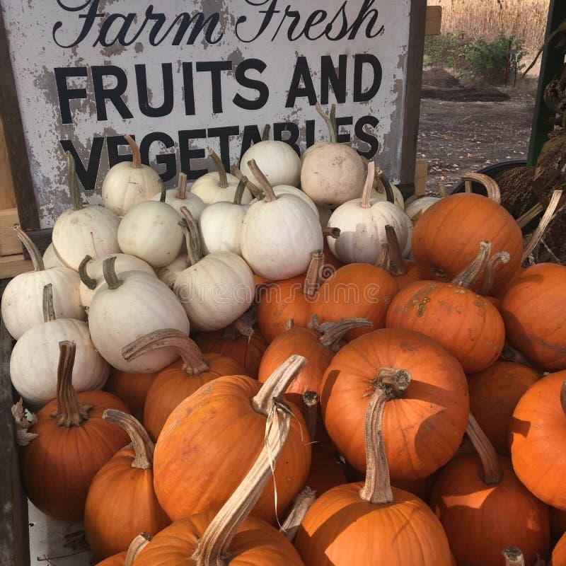Pumpkins à vendre sur un stand de ferme au bord de la route photo libre de droits