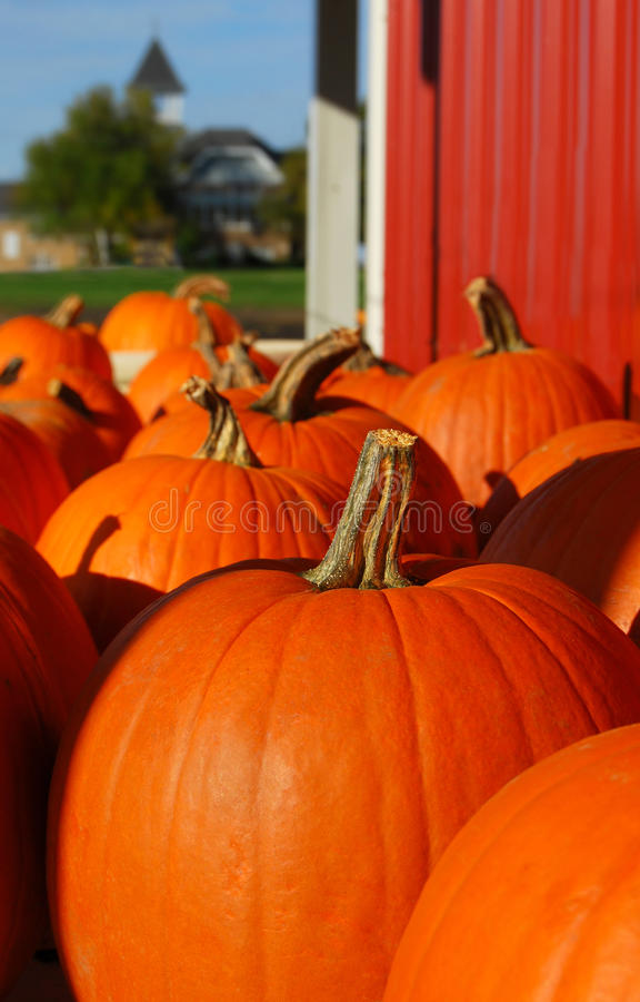 Free Pumpkins Stock Images - 11231384
