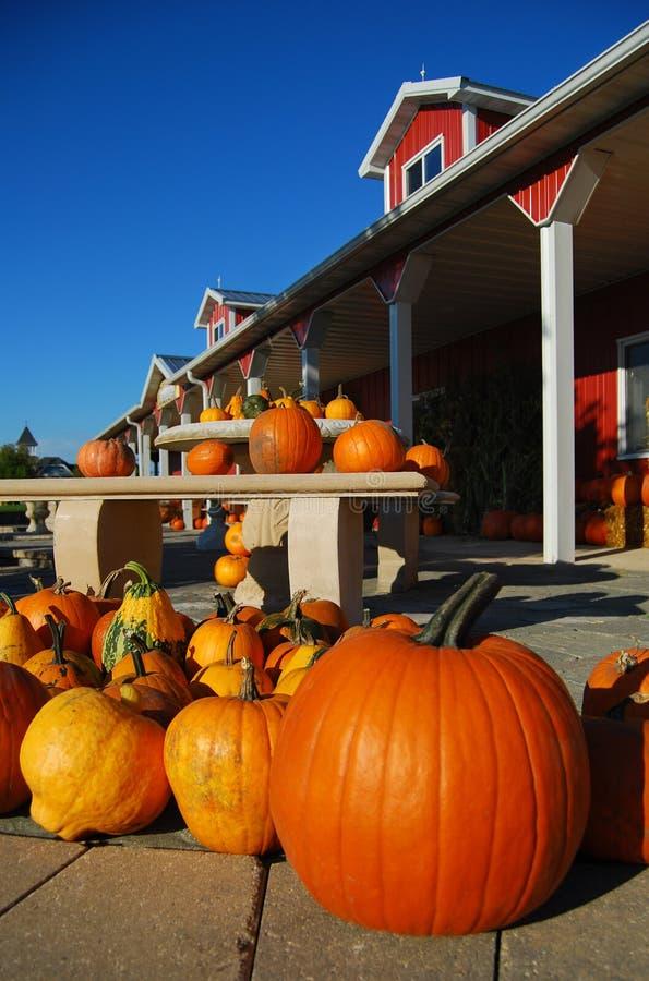 Free Pumpkins Stock Images - 11231564