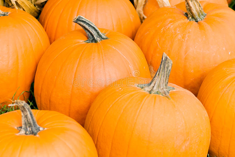 Pumpkins. A closeup of fall pumpkins royalty free stock photo