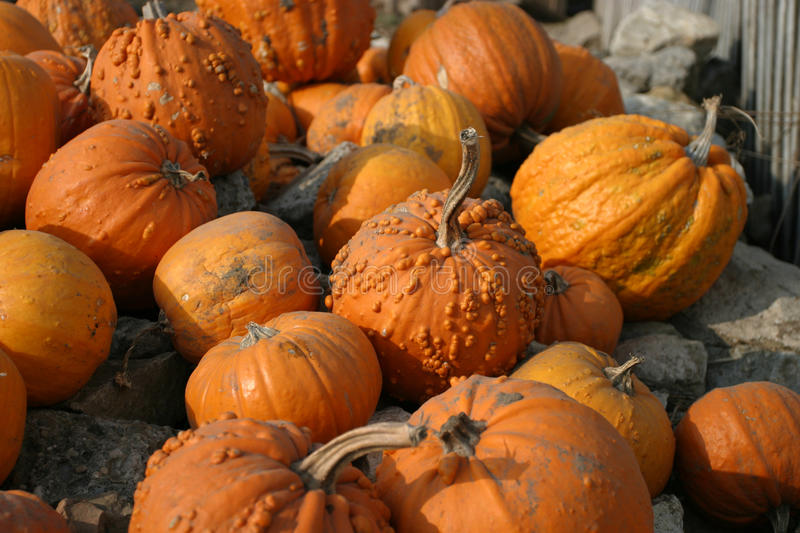 Pumpkins. Some pumpkins gathered on a pile of rocks royalty free stock images