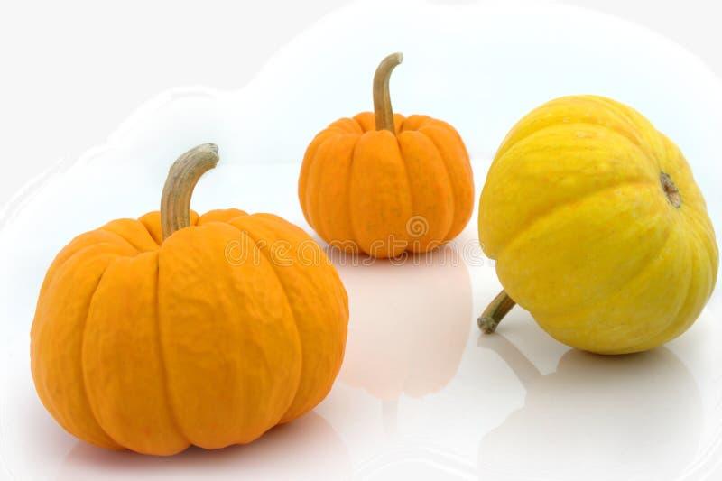 Download Pumpkins stock image. Image of squash, gourd, white, cucurbita - 13074171
