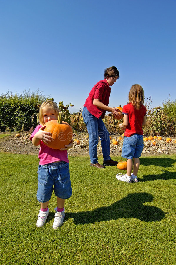 Download Pumpkins stock image. Image of green, color, chose, blurry - 1320551