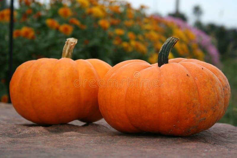 Download Pumpkins Stock Photos - Image: 1713663