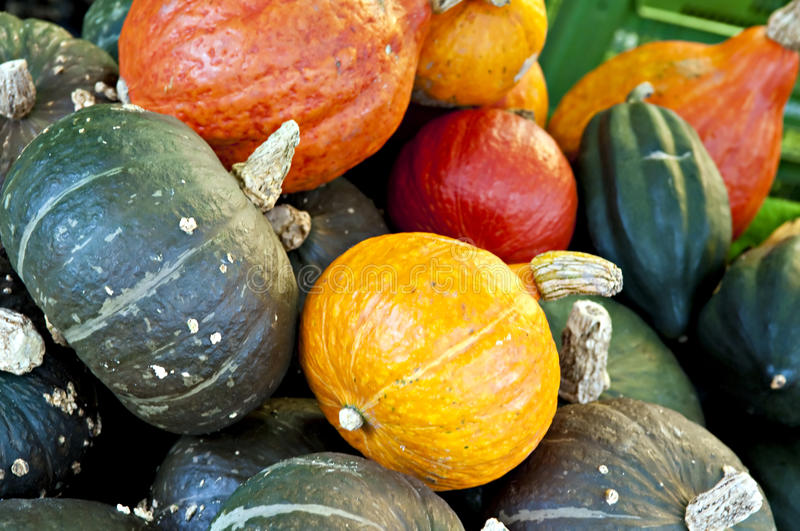Download Pumpkins stock photo. Image of variety, colors, healthy - 17640914