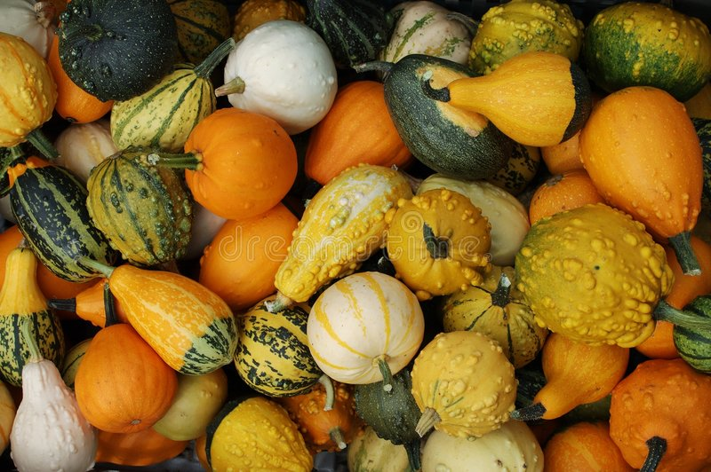 Download Pumpkins stock photo. Image of fruits, fall, yellow, vegetables - 19684