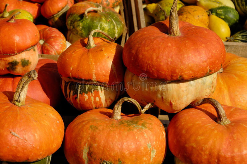 Download Pumpkins stock photo. Image of thanksgiving, backgrounds - 21255894