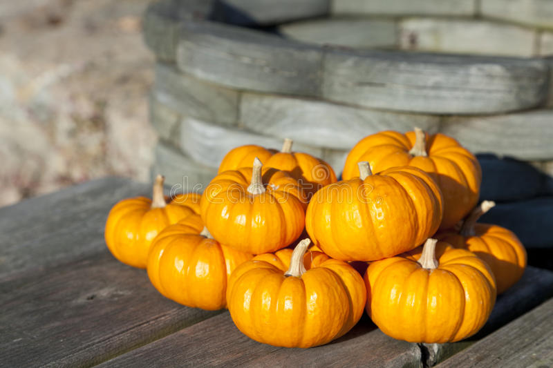 Download Pumpkins stock image. Image of ornamental, colorful, bright - 21600949